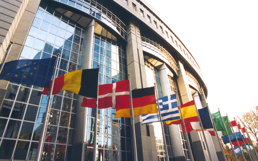 Warum nicht eine NGO in Brüssel vertreten?