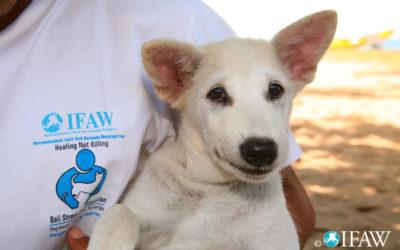 Portrait: International Fund for Animal Welfare